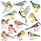 DECOWALL DS-8038 Pequeñas aves (Pequeña) Vinilo Pegatinas Decorativas Adhesiva Pared Dormitorio Saln Guardera Habitaci Infantiles Nios Bebs